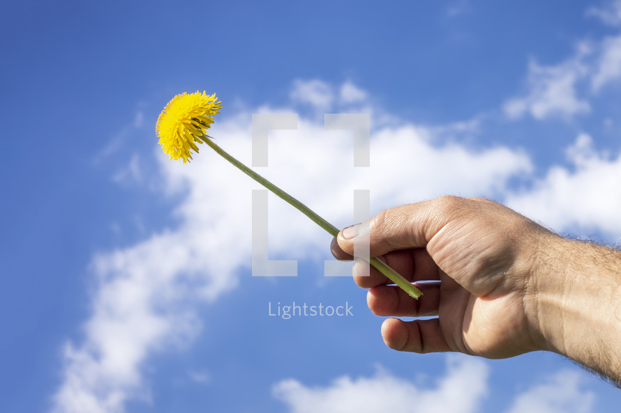 hand holding up a dandelion