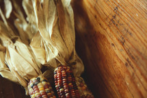 dried corn on wood