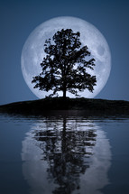 tree in front of a full moon