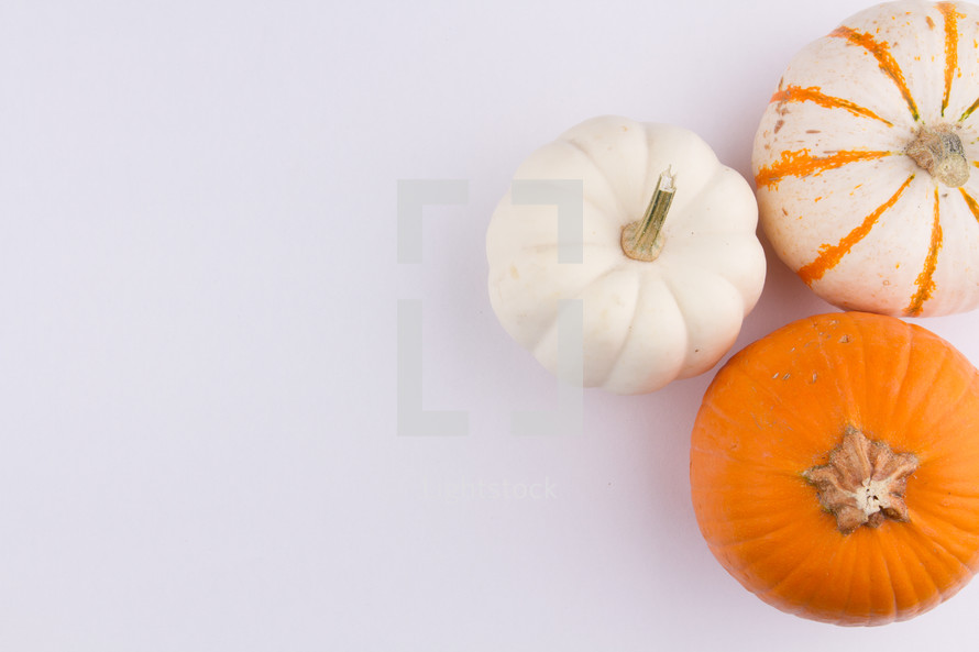 three pumpkins on a white background