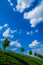 trees on a green hill and blue sky