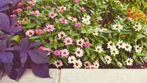flowers in a flower bed