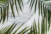 palm fronds on linens