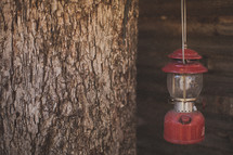 A red lantern hanging from a tree