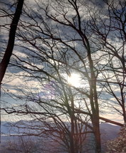 glow of the sun through winter tree branches