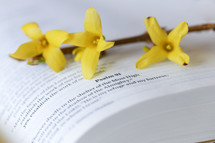 yellow flowers on the pages of a Bible