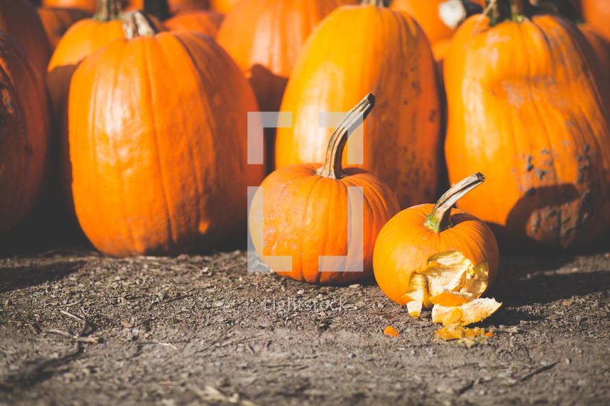 broken pumpkin in a pumpkin patch