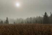 fog over a field of tall brown grasses