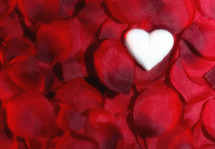 heart on rose petals