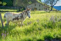 donkey on a farm
