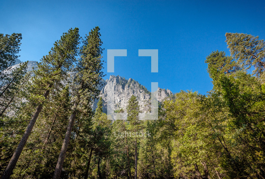tall trees and a mountain peak