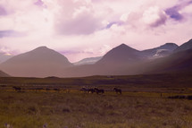 horses in a prairie and mountains in the background