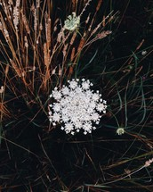 white flower growing between grasses