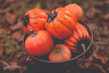 orange pumpkins in a rusty bowl