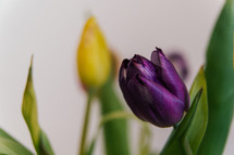 yellow and purple tulip bouquet