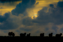 silhouettes of sheep and clouds in the sky