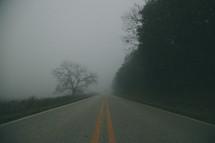 fog on a rural road