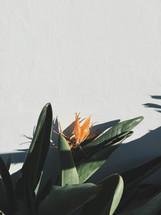 orange tropical bird of paradise flower