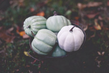 teal and white pumpkins in a bucket