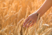touching wheat grains
