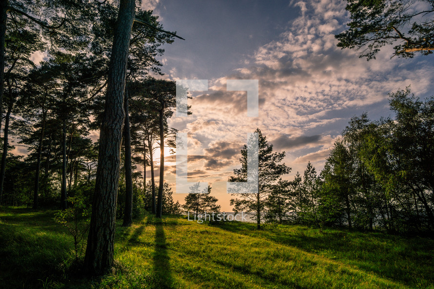 sunlight on green grass in the opening of a forest