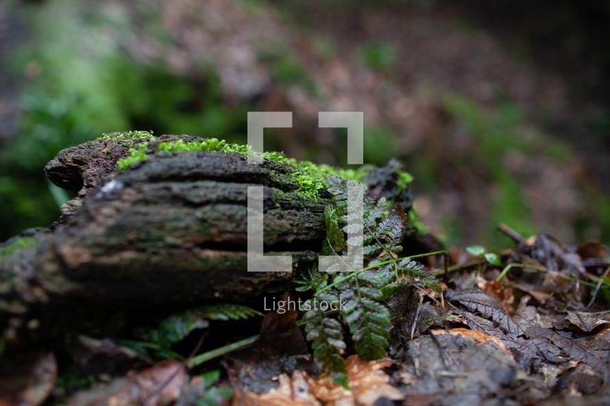 moss on a wet log