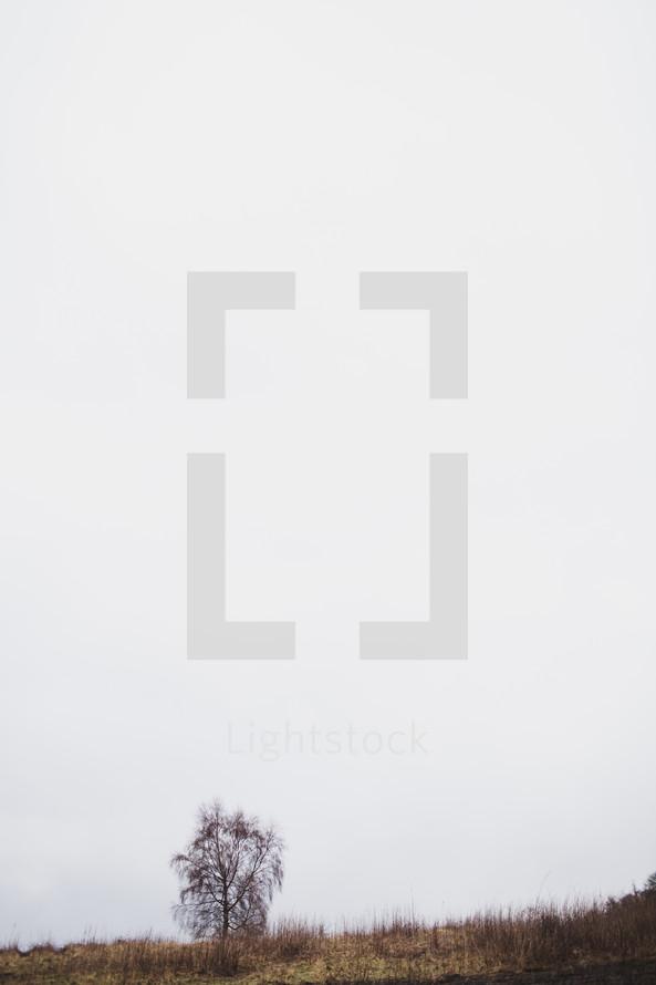 tree in a foggy field
