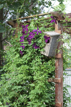 wooden birdhouse and purple flowers on a vine