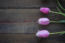 pink tulips on wood boards