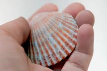 hand holding a seashell