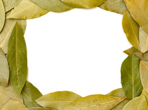 bay leaf border