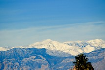 view of Snow capped mountains from the Las Vegas Valley and the contrast of palm trees in January