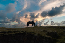 a grazing horse on a hillside