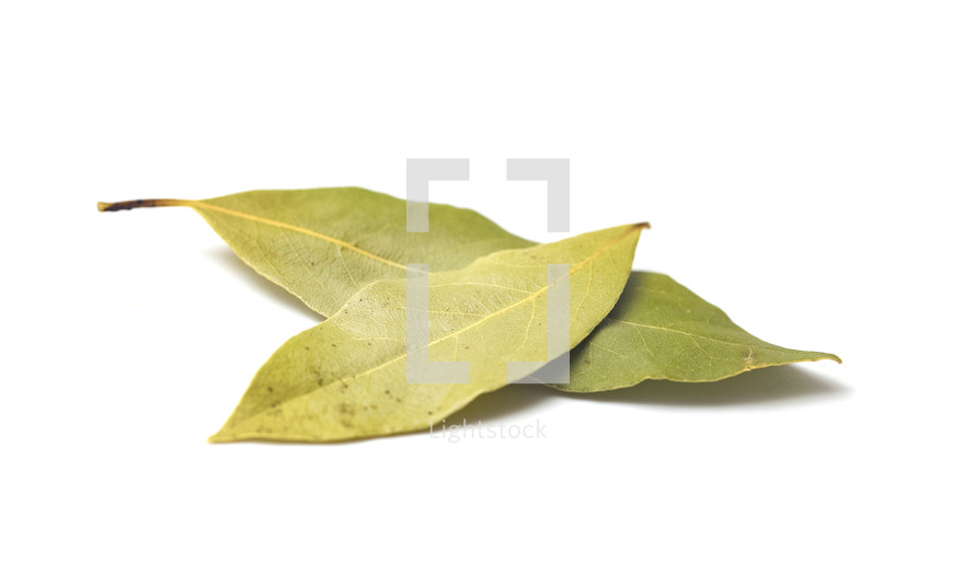 green bay leaves on a white background