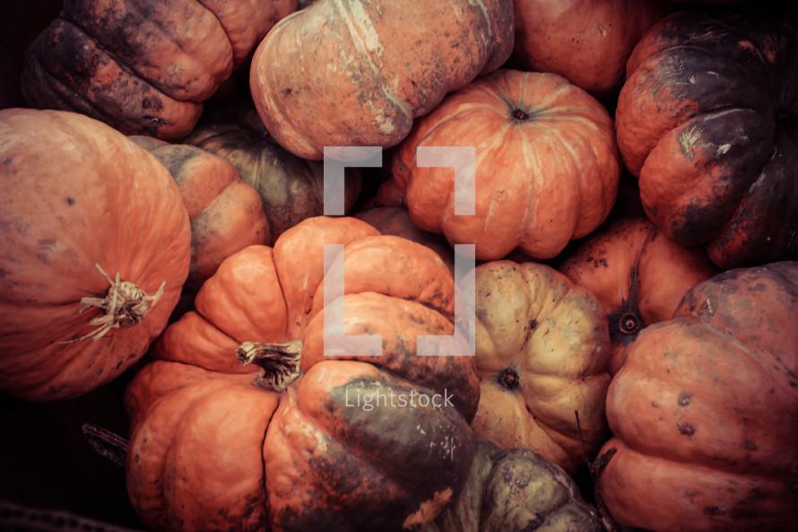 pile of orange spotted pumpkins