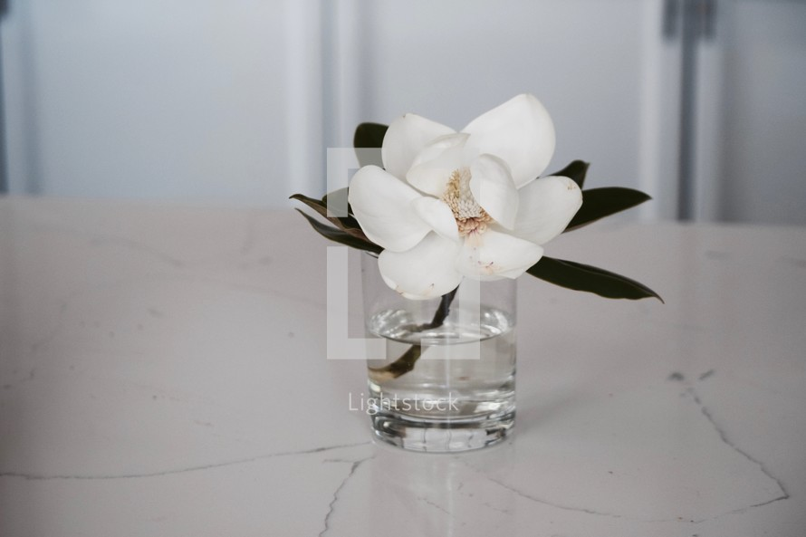 magnolia flower in a vase on a marble countertop