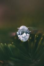 diamond ring on pine needles