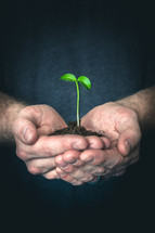 Cupped hands holding out a seedling with soil