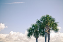 palm trees and white clouds