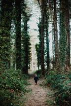 a toddler boy walking through a forest