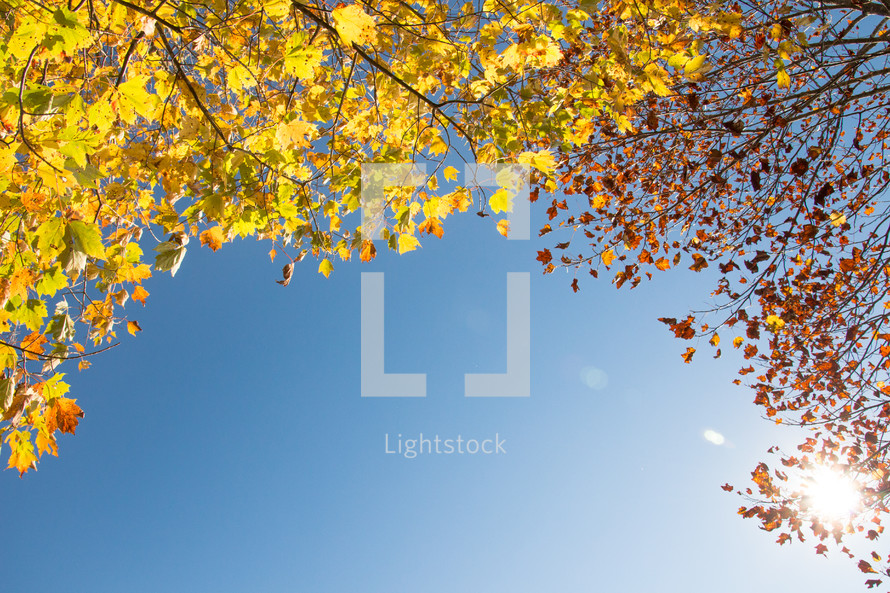 sky and leaves on a fall tree