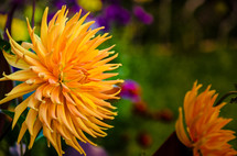 yellow and purple flowers