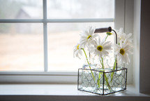 vases of daisies in a window sill