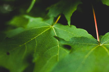 green leaves on a tree
