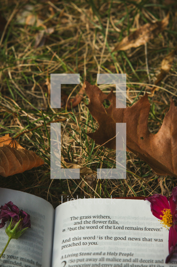 The grass withers and flower falls, but the word of the Lord remains forever