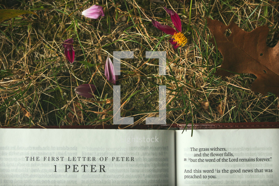 1 Peter, The grass withers and flower falls, but the word of the Lord remains forever