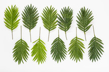 palm fronds on white