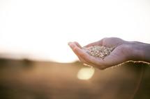 hand full of seeds