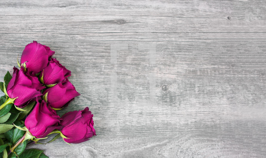 roses on a wood background