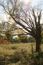 rural fall tree